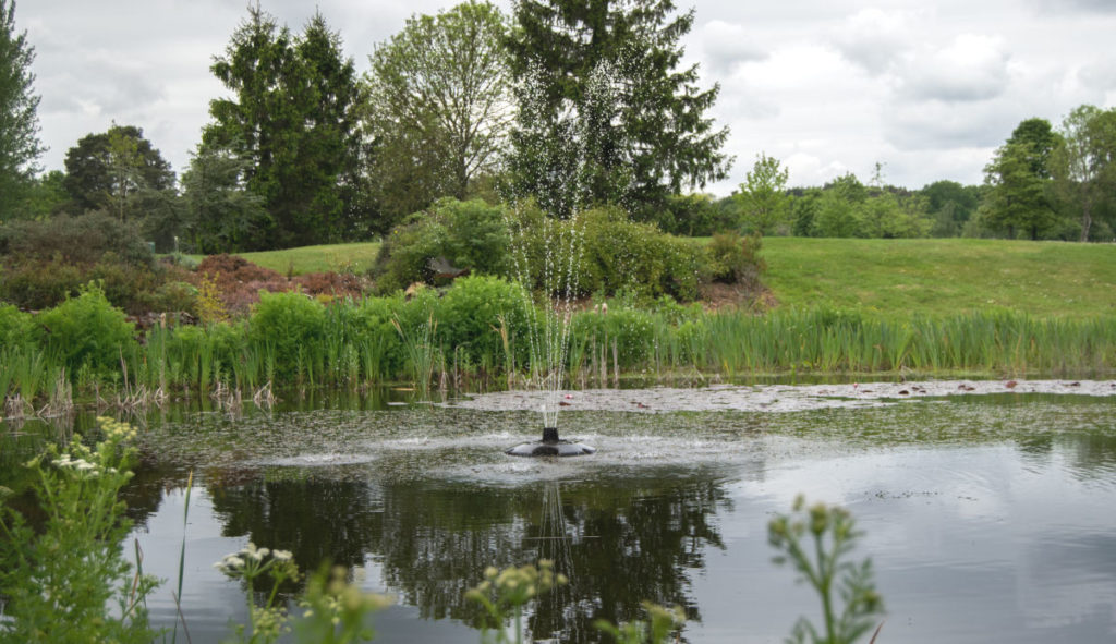 The pond on the 18th